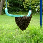 Swarm on a swing